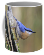 Nuthatch -- Coffee Mug