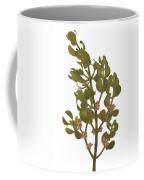 Pacific Mistletoe Coffee Mug