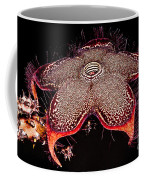 Persian Carpet Flower Coffee Mug