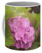 Purple Hydrangea At Rainy Garden In June, Japan Coffee Mug