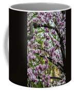 Saucer Magnolias In Central Park Coffee Mug