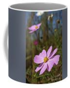 Sensation Cosmos Bipinnatus Fully Bloomed Pink Cosmos At Garde Coffee Mug