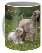 Soft-coated Wheaten Terriers Coffee Mug
