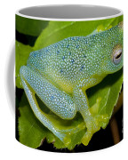 Spiny Glass Frog Coffee Mug