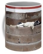 Street Dog Sleeping On Steps Coffee Mug