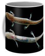 Valdina Farms Salamander Coffee Mug