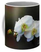 White Orchid - Doritaenopsis Orchid Coffee Mug