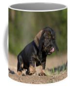 Wire-haired Dachshund Puppy Coffee Mug