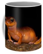 Yellow-eye Ensatina Salamander Coffee Mug