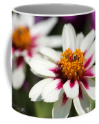 Zinnia Named Zahara Starlight Rose Coffee Mug