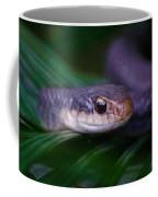 2015 03 29 02 _4054 Coffee Mug