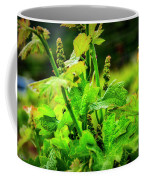 2629- Comsrock Winery Coffee Mug