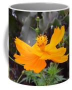 Australia - Yellow Cosmos Carpet Flower Coffee Mug