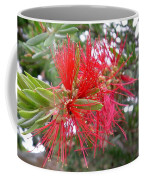 Australia - Red Flower Of The Callistemon Coffee Mug
