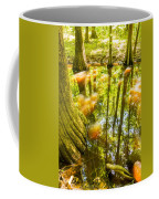 cypress forest and swamp of Congaree National Park in South Caro Coffee Mug