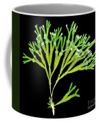 Rockweed Seaweed, X-ray Coffee Mug