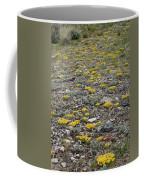2d07512 Prairie Zinnia In Lost River Range Coffee Mug