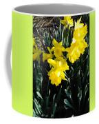 A Daffodil Exhibit Coffee Mug