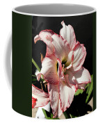 Amaryllidaceae Hippeastrum Amorice Coffee Mug