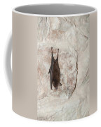 Bats Inside The Pyramid At Grupo Nohoch Mul At The Coba Ruins  Coffee Mug