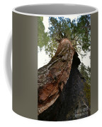 Giant Sequoia Trees Coffee Mug