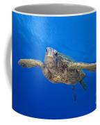 Hawaii, Green Sea Turtle Coffee Mug