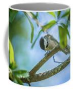 Huthatch Bird  Nut Pecker In The Wild On A Tree Coffee Mug