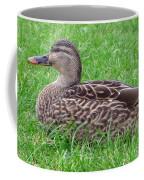 New Zealand - Female Mallard Duck Coffee Mug