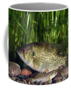 Rock Bass Coffee Mug
