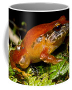 Rosy Ground Frog Coffee Mug