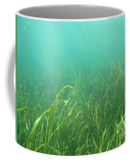 Shallow Freshwater Lake Coffee Mug