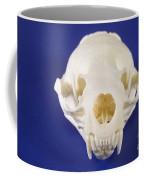 Skull Of A River Otter Coffee Mug