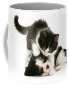 Sleeping Puppy Coffee Mug