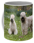 Soft-coated Wheaten Terriers Coffee Mug