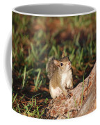 3- Squirrel Coffee Mug
