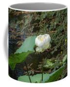 White Lotus Flower Flower Lotus Nature Summer Green Plant Blossom Asian Coffee Mug