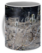 Woolly Willow Growing Wild In The Black Coffee Mug