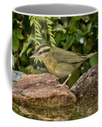 Worm-eating Warbler Coffee Mug
