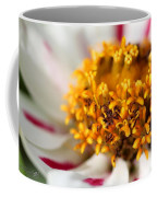 Zinnia Named Zahara Starlight Rose Coffee Mug