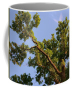 3256 Photography Forest Scene  Coffee Mug