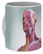 Facial Muscles Coffee Mug