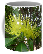 Australia - Pollinating A Green Leionema Flower Coffee Mug