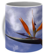 Australia - Bird Of Paradise On Blue Coffee Mug