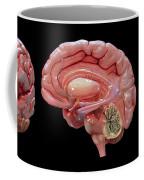 3d Rendering Of Human Brain Coffee Mug