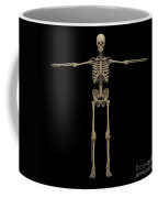 3d Rendering Of Human Skeletal System Coffee Mug