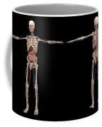 3d Rendering Of Human Skeleton Coffee Mug