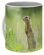 A European Ground Squirrel Standing In A Meadow In Spring Coffee Mug