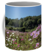 Sensation Cosmos Bipinnatus Fully Bloomed Colorful Cosmos On M Coffee Mug