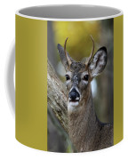White Tailed Deer Smithtown New York Coffee Mug