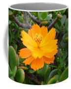 Australia - Cosmos Carpet Yellow Flower Coffee Mug